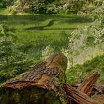 Highland. Synevyr Lake. thumbnail