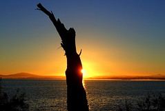 BRIDPORT SUNSET (Lani Elliott) Tags: nature naturephotography landscape seascape sunset sky tree silhouette scene view scenic colour colourful color bright bridport scenictasmania sea ocean water fantastic beautiful awesome gorgeous wonderful