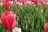 P3080163 (Vagamundos / Carlos Olmo) Tags: dallas usa eeuu vagamundos vagamundos2018 texas tejas flower flores jardín garden arboretum botanical botanicalgarden jardínbotánico