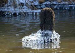 Art of Nature (Jaedde & Sis) Tags: cold ice frost frozen creek stream storå nybro challengeclubwinner