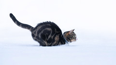 'The Bounder' (Jonathan Casey) Tags: snow winter beast east norfolk uk nikon d850 200mm f2 vr
