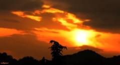 sfumature (archgionni) Tags: colline hills sky trees nuvole clouds arancione orange sole sun alba sunrise