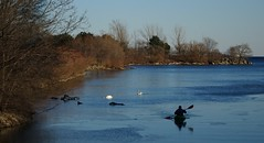Rowing on the Humber River, Toronto (Trinimusic2008 - stay blessed) Tags: trinimusic2008 judymeikle nature canoe rowing swans geese today walk march 2018 sunny cold afternoon outdoors toronto to ontario canada lake lakeontario wildlife water sky bushes sonydschx80 humberbayparkwest