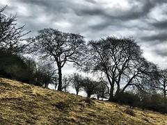 Hillside (mark.griffin52) Tags: england hertfordshire ashridgeestate ivinghoebeacon countryside hillside beechtrees trees landscape