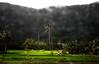 On the road (Trang  C-Cat ) Tags: mountain mountains palm palmtrees field rice ricefields green nature farm vietnam centralvietnam nikon nikond3300 trees plants farming asia asian vietnamese