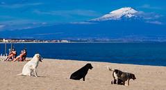 Agnone bagni - Sicily, march 2018 (Icarus1566) Tags: sicily beach siciliaorientale still etna sonycamera alphailce3000 land landscape winter goodmorning holiday nature italy