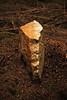 Caillou (Steph Blin) Tags: caillou borne bois forêt nature forest stone minéral pierre bicolore deuxfaces