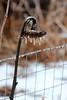 Happy Icy Fence Friday (LauraWentz) Tags: happyfencefriday thebackyard anoldsunflower ice winter snow bokeh