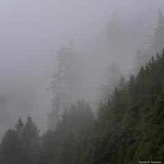 Mist and Trees (petechar) Tags: water petechar charlesrpeterson landscape lanecounty oregon highway101 trees conifers mist panasonicg9 leica1260mm ushighway101
