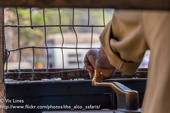 180221_12 (The Alco Safaris) Tags: calcutta kolkata tram ctc