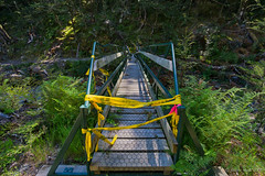 New bridge damaged by falling tree (NettyA) Tags: 2018 dartriver day6 mtaspiringnationalpark nz newzealand reesdartcircuit southisland tramp tramping spaniardcreek bridge footbridge damaged