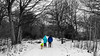 Dog walking in the snow (PhredKH) Tags: canonphotography connaughtwater fredkh photosbyphredkh phredkh splendid urbanparks forest eppingforest trees snow people peoplewatching outdoorphotography outdoors dogs canine selective selectivecolour parks gradens essex canoneos5dmarkiii 2470mm ef2470mmf4lisusm tree park canoneos5dmkiii