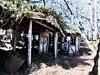 華巴諾砲台:IMG_1820 IMG_1790 (billlushana1) Tags: yushannationalpark yushannationalpark玉山國家公園 hualien national nationalpark forest batongguanmountain batongguanhistorictrail 八通關古道 八通關東段 iphone7 iphoneography iphone