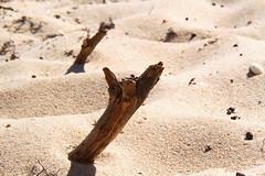 wood (tom.edwards1974) Tags: landscape seascape color colour beach wood stick sticks driftwood drift sand sun melbourne victoria australia yellow brown