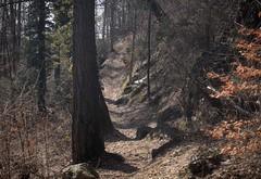 forêt (bulbocode909) Tags: valais suisse forêts arbres sentiers nature montagnes feuilles orange vert rochers hiver