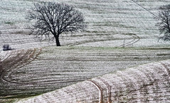Sottile strato di neve (rik58) Tags: marche inverno alberi neve