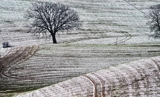 Sottile strato di neve