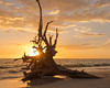 13a 8c 48425.jpg (mpluzier) Tags: loverskey stateparks floridabeaches sunsets deadtrees floridaparks beaches southwestcoast coastlines deadstags