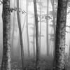 Deep in the forest II (ilias varelas) Tags: greece fog mood mono monochrome mist blackandwhite bw nature forest field light landscape land atmosphere square trees
