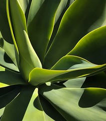 Green plant in Echo Park (p.bjork) Tags: