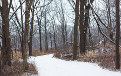 The Way of Winter (John Westrock) Tags: forest nature winter snow trees wisconsin midwest cloudy overcast canoneos5dmarkiii canonef2470mmf28lusm minookapark waukesha