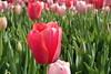 P3080162 (Vagamundos / Carlos Olmo) Tags: dallas usa eeuu vagamundos vagamundos2018 texas tejas flower flores jardín garden arboretum botanical botanicalgarden jardínbotánico