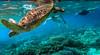 Apo island coral and sea turtle trip-1-2 (walterkolkma) Tags: apoisland philippines negrosoriental seaturtle snorkeling coral reef sun sea visayas siquijor turtle gopro