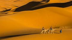 Evening walk (Smeets Paul (thanks for 2 million views)) Tags: dunesdemerzouga morocco desert landscape dunes evening sand ngc