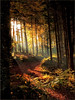 a u t u m n (Stefan Wirtz) Tags: autumn herbst wald sonnenstrahlen forest sun bietingen badenwürttemberg