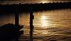 Crepuscule on Key West (Professor Bop) Tags: ocean olympusem1 professorbop drjazz crepusculeonkeywest keywestflorida sunset dusk birds sepia dock rocks mosca