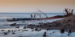 Song of the dead tree (thierry_meunier) Tags: antilles caraïbislands caraïbes lessaintes beach crépuscule islands mer ocean plage sea sunset travel voyage îles