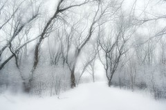 Winter Wonderland (Bo Dudas) Tags: snow snowstorm winter frozen heaven trees white bw blur bokeh