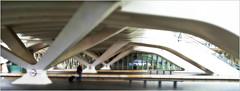Gare des Guillemins, Liège, Belgium (claude lina) Tags: claudelina belgium belgique belgïe liège gare station garedesguillemins santiagocalatrava