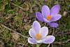 Voorjaar (Astrid1949) Tags: voorjaar 2018 maart blauw wit