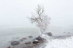 winter lake (Marc McDermott) Tags: snow winter tree longexposure water lake lakeontario pickering ontario canada cold