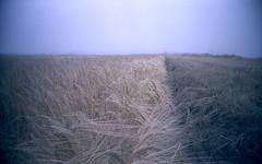 Norfolk Mist (alspix) Tags: mist grey harvest dull minimalist vivitar uws