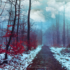 straight way (Dyrk.Wyst) Tags: landschaft schnee winter wuppertal chilly forest landscape misty mood nature outdoors trees wet woods surreal manipulation red blue hike