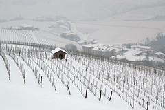 Paesaggi di Langa...Barolo (mirella cotella) Tags: wines winterscape winter white winterscene wineyards hills landscapes barolo langa snow country countryscapes