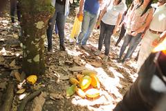 IMG_0373 (Golf Team BMCargo) Tags: senderodelcacao sendero del cacao senderocacao sanfranciscodemacoris sanfrancisco bmcargo bmcargord yolotraigoporbmcargo