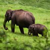 Follow me kiddo (abhishekskumar) Tags: elephants munnar endemic asia india forest grass green lovely lovelyshooftheday babyelephant cute cuteness flickrlove flickrdaily flickraddicts