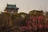 大阪城公園18・Osaka Castle Park (anglo10) Tags: 大阪市 大阪府 japan 大阪城公園 flower 梅 夕景 sunset 城 castle