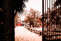 Neve in giardino (o.solemio) Tags: photo n° 438 minoosolemio parco giardino cancello alberi cespugli neve case allaperto colore nikond40