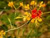 Colors (Balaji Photography - 4.9M views and Growing) Tags: flora flower flowers flowermacro floraandfauna flickr flowergarden flowerscolors flowersofindia