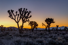 Mojave Desert Sunrise (Jeffrey Sullivan) Tags: joshua tree forest sunrise mojave desert death valley national park panamint springs california usa landscape nature travel photography canon eos 6d road trip photo copyright 2017 february jeff sullivan