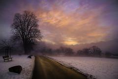 sunrise sonnenberg (adlin) Tags: d850 kriens sonnenberg morning winter switzerland road reflection sun clouds bare tree soft gentle nikond850