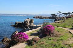 IMG_7646 (mudsharkalex) Tags: california pacificgrove pacificgroveca