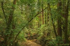 Huddert Creek Trail (Randall Harrison) Tags: huddertpark woodside redwoods creek