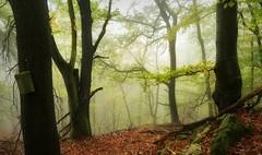 Birdhouse (BphotoR) Tags: bphotor birdhouse germany fog forest woods october autumn place