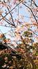 梅の花 (アルム=バンド) Tags: 梅 紅梅 白梅 梅の花 梅花 春 お寺 寺院 仏閣 寺院仏閣 寺