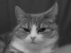 20180307002053 (koppomcolors) Tags: koppomcolors katt cat